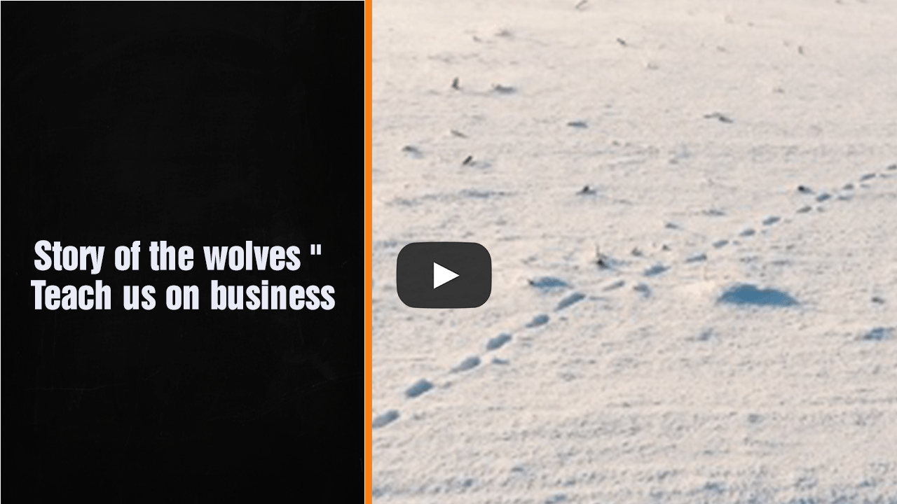 Story Of The Wolves – Teach us on business – Award Winning Accountant